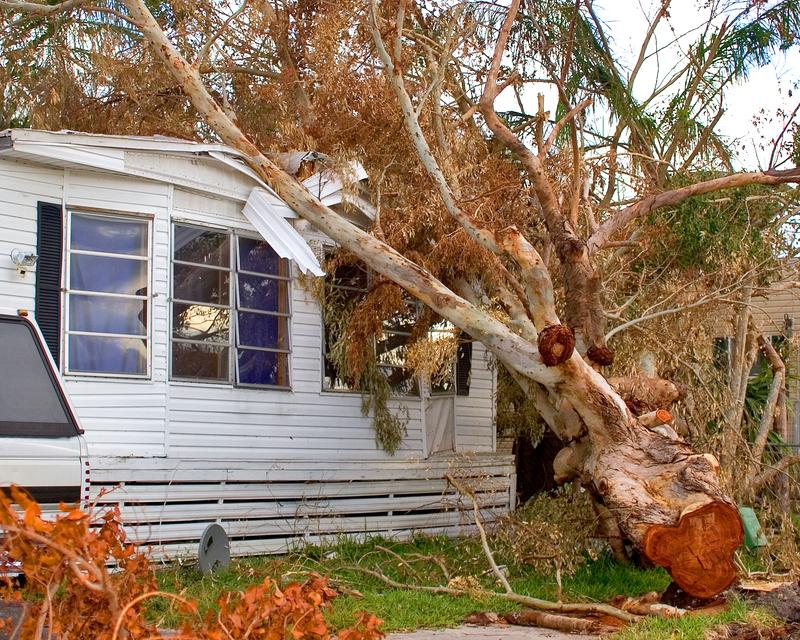 tree falling on house